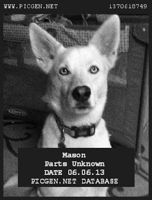 Dog Mugshot