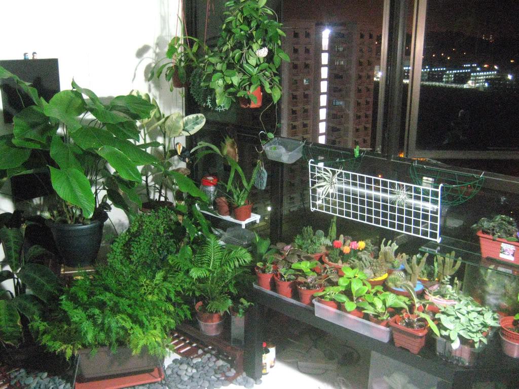 Los mejores consejos para un jard n interior jard n y for Jardin 81 treinta y tres