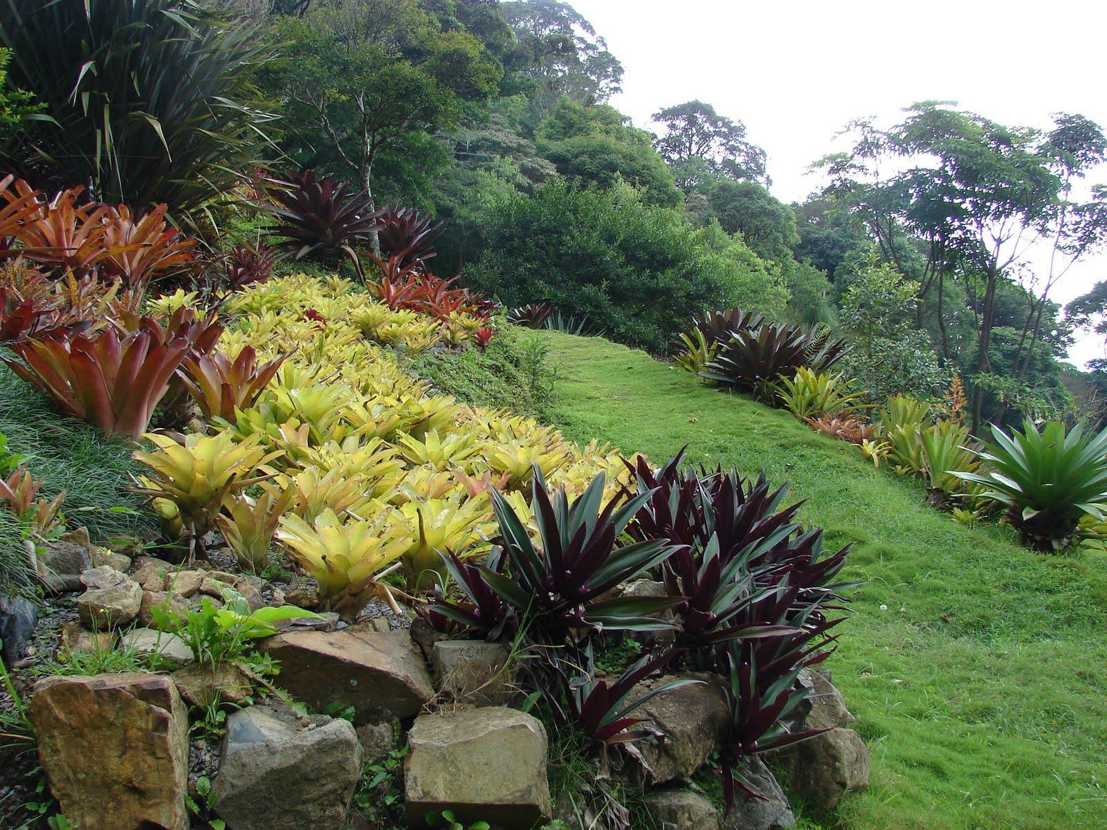 Paisajismo pueblos y jardines contrastes de colores - Bordes para jardines ...