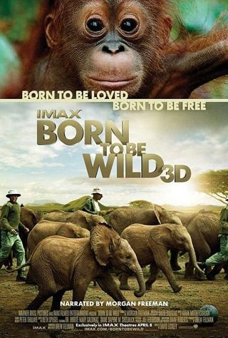 Descarga Born to Be Wild