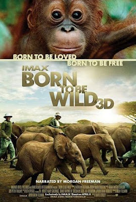 descargar Born to Be Wild – DVDRIP LATINO