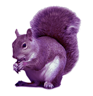 TPP Charity Recruitment - purple squirrel