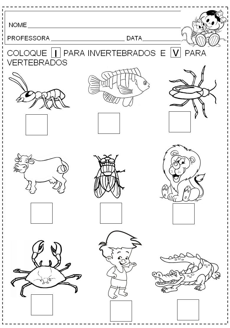 Pin Animais Vertebrados Invertebrados Exerc Cios Atividades Para ...