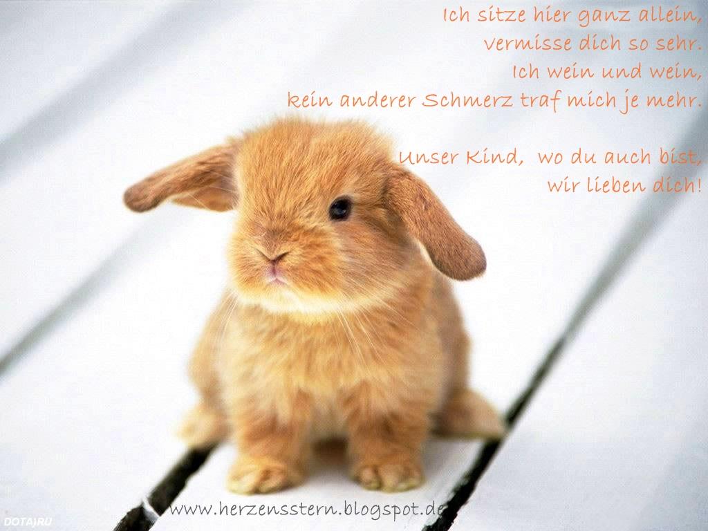 http://4.bp.blogspot.com/-jZZ3KFSgojY/UVWHE9Yw4KI/AAAAAAAAB28/vMyl3oBQY0o/s1600/baby_rabbit_wallpaper.jpg
