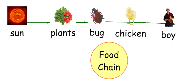 Through the living organisms in the food chains and the food webs