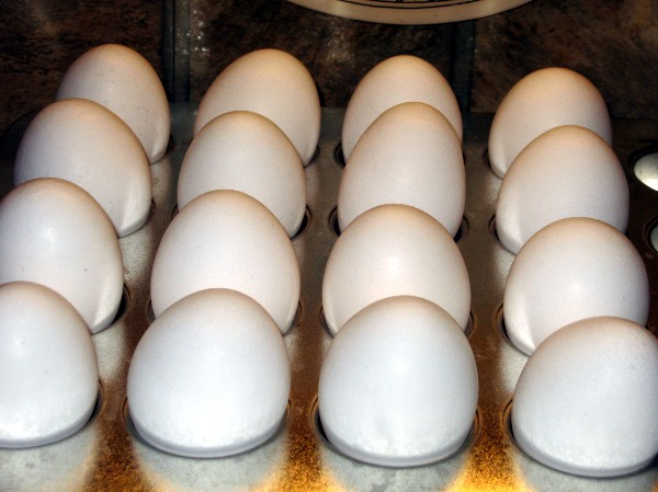 """Coleen's Recipes: """"HARD BOILED"""" EGGS FROM THE OVEN !!"""