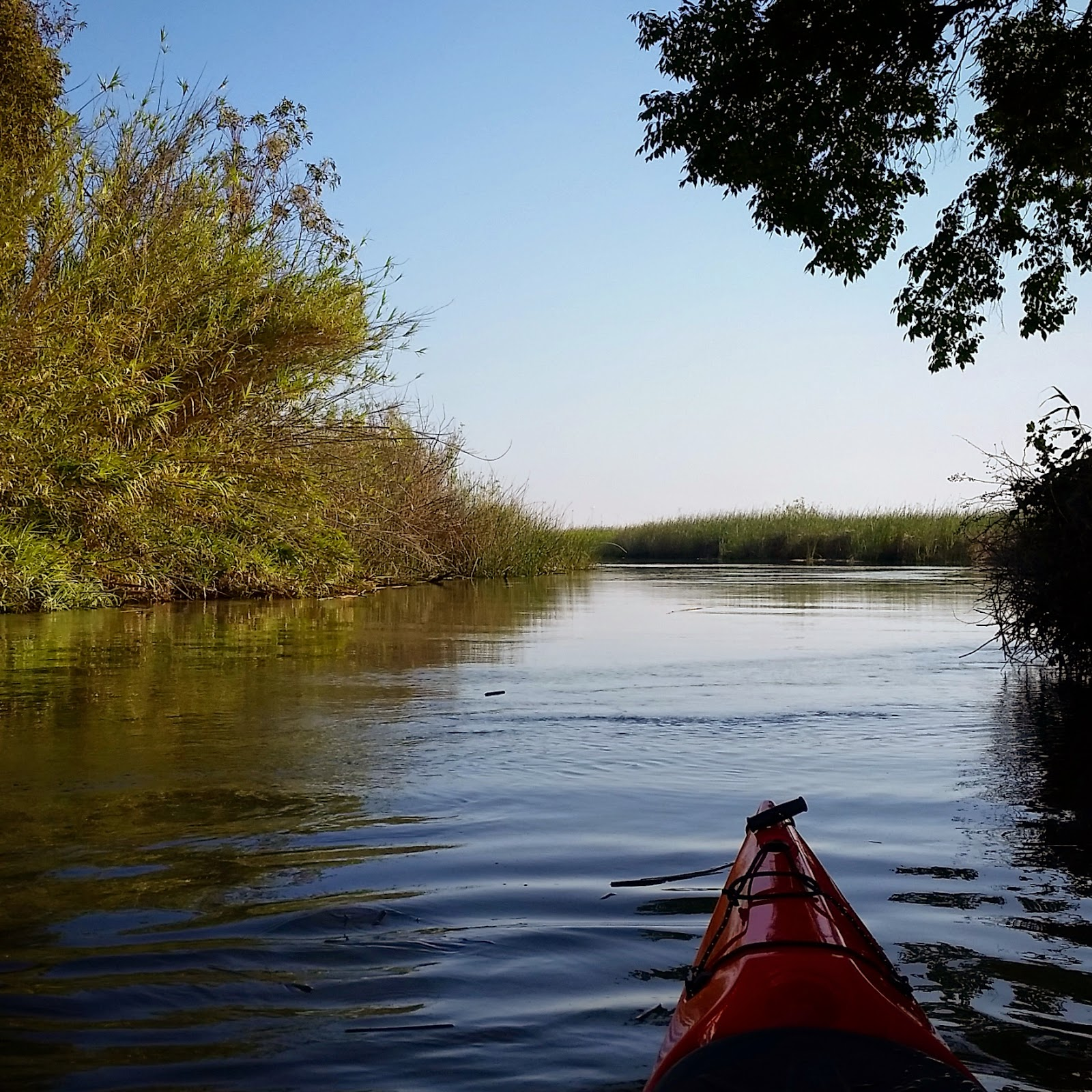 Kayaking the california delta antioch to sherman island waterfowl we paddled against a gentle current until we reached cabin slough where we caught the outgoing tide that led us to an entrance into sherman island waterfowl geenschuldenfo Image collections