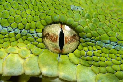 Hình ảnh sống động về rắn