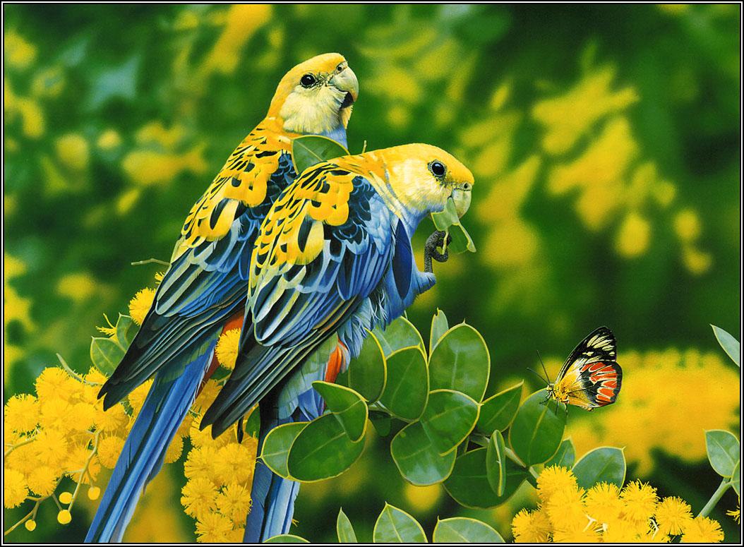 http://4.bp.blogspot.com/-jZrUoi7XMUg/UQfrot0iDKI/AAAAAAAAHhE/j3AJIy1BH9c/s1600/love-birds-wallpapers+05.jpg