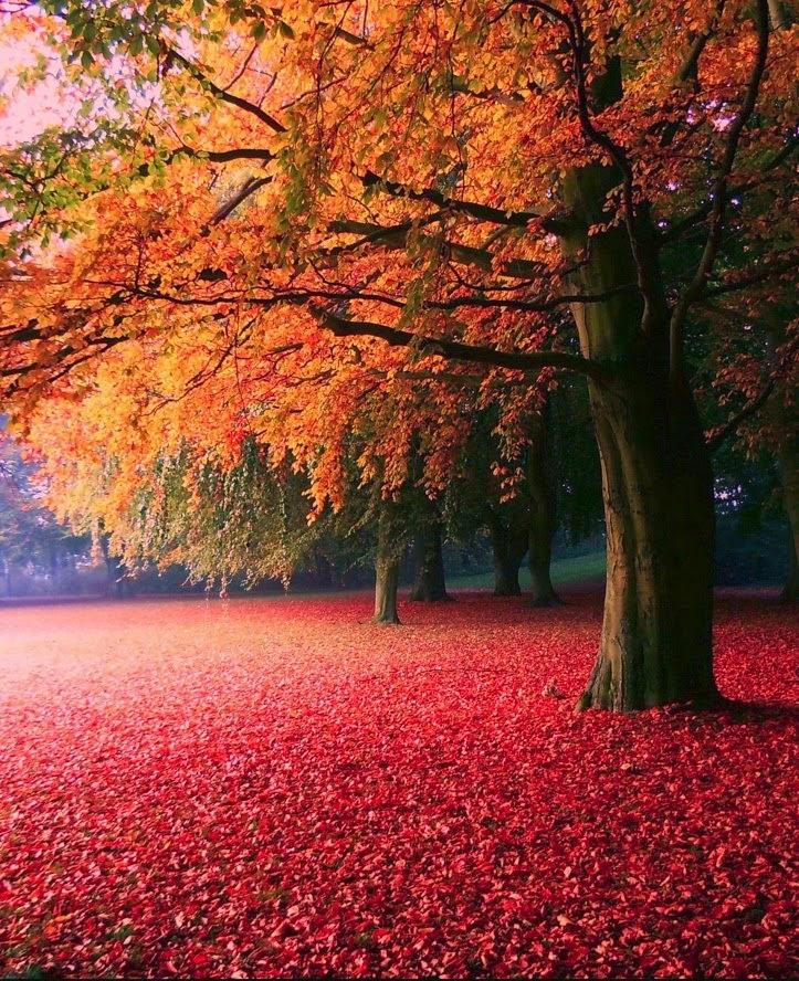 Autumn, Söderslätt, Sweden