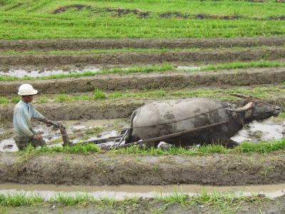 peluang-usaha-pertanian