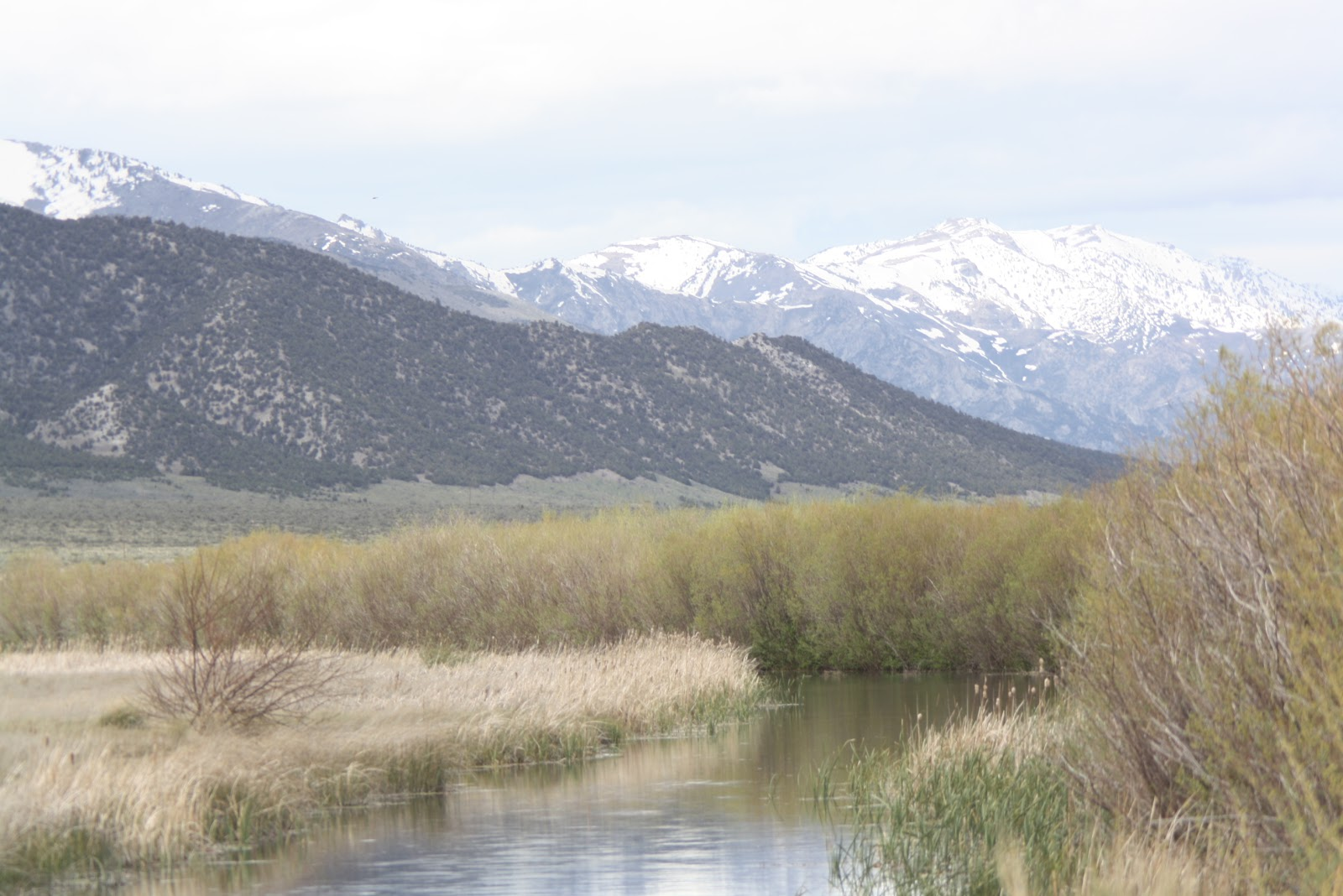 Dispatches from the wild world birding northern nevada for Plenty of fish reno