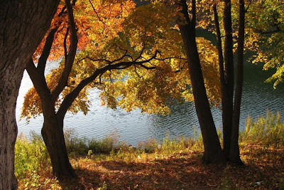 trees with autumn leaves near a lake