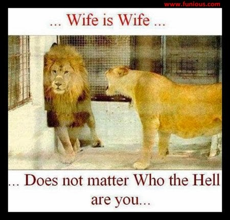 Funny Wife is Wife
