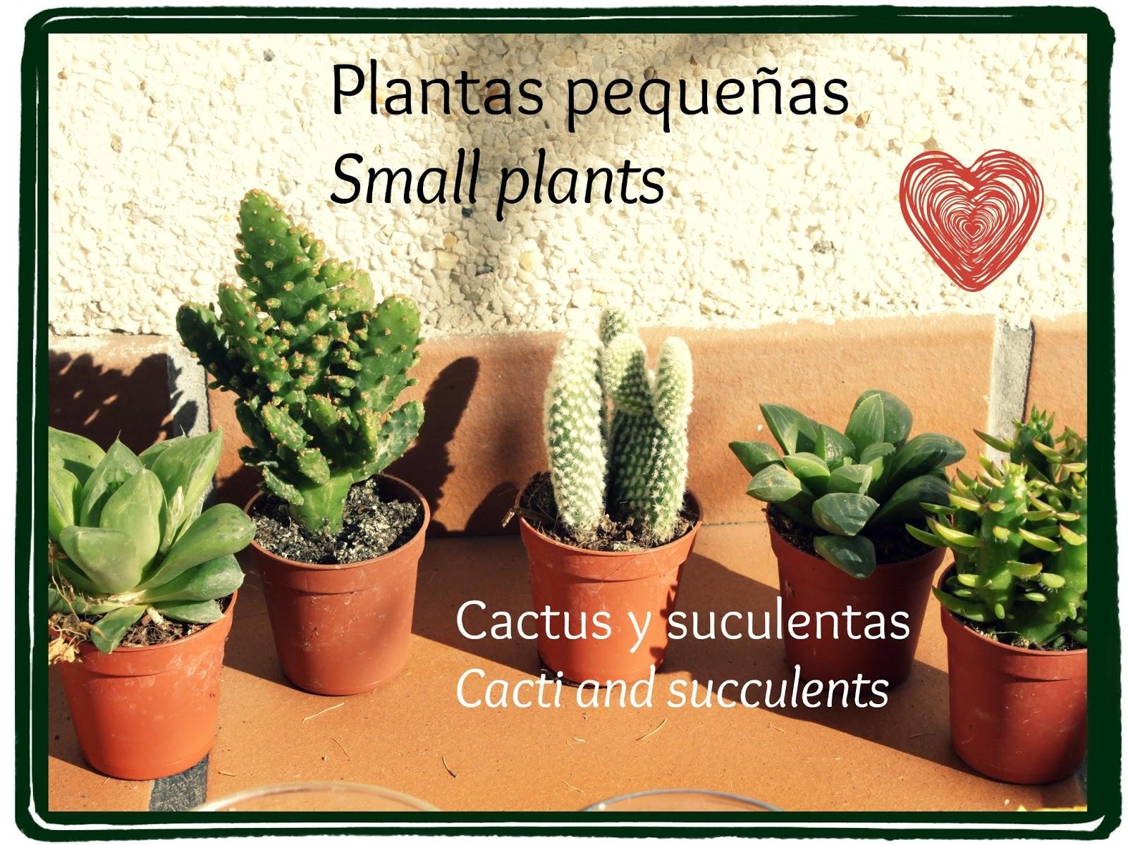 Dare to happen ideas para san valent n ii valentine 39 s for Cactus cuidados interior