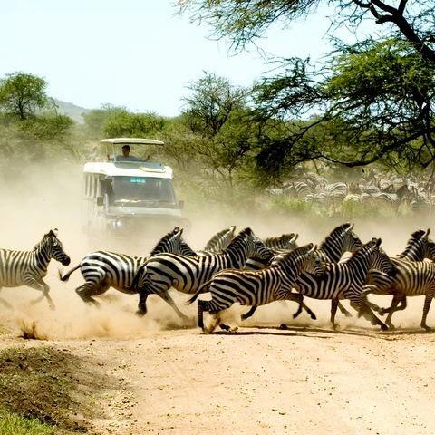 Safari Tanzanie prom ovente flash