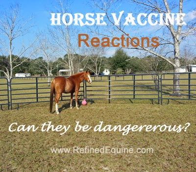 Horse Vaccine Reactions - Can they be dangerous?