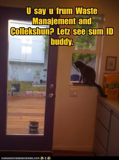 Funny Raccoon Pictures With Captions Posted by lindsey lu at 5:07
