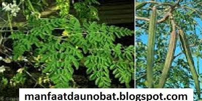 manfaat khasiat daun kelor