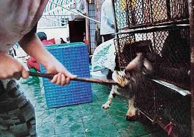 Cat Eating Dog Food Uti