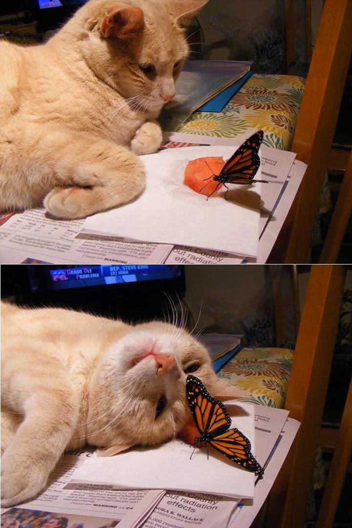 Funny animals of the week - 23 May 2014 (40 pics), animal pictures, funny pictures of animals