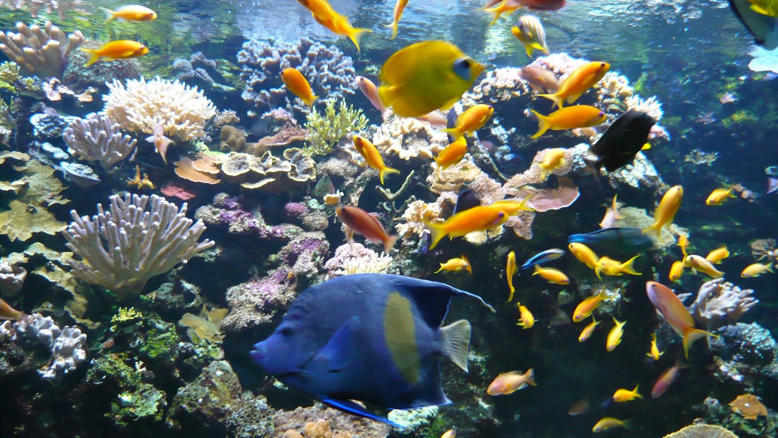 ma poussette 224 petit plongeon 224 l aquarium de la porte dor 233 e
