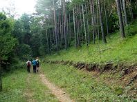 El bosc de pi roig ens envolta