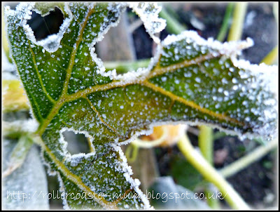 frost on Pumpkins