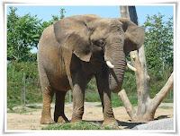 Elephant Animal Pictures