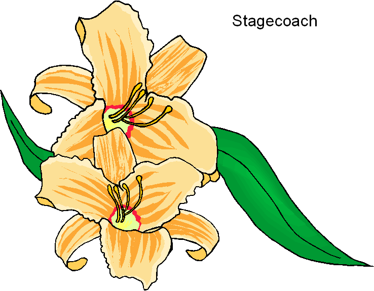 Stagecoach Yellow Flower Clipart