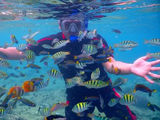 Balicasag Island Snorkeling