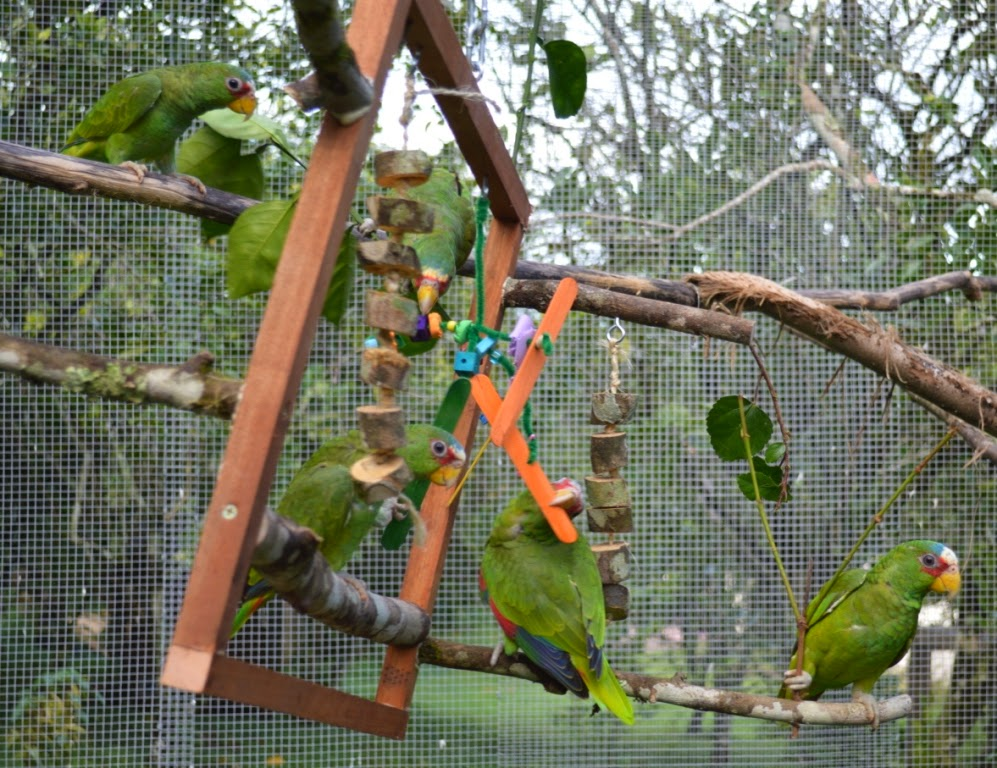 Bird Enrichment Toys : Images about enrichment on pinterest bird toys