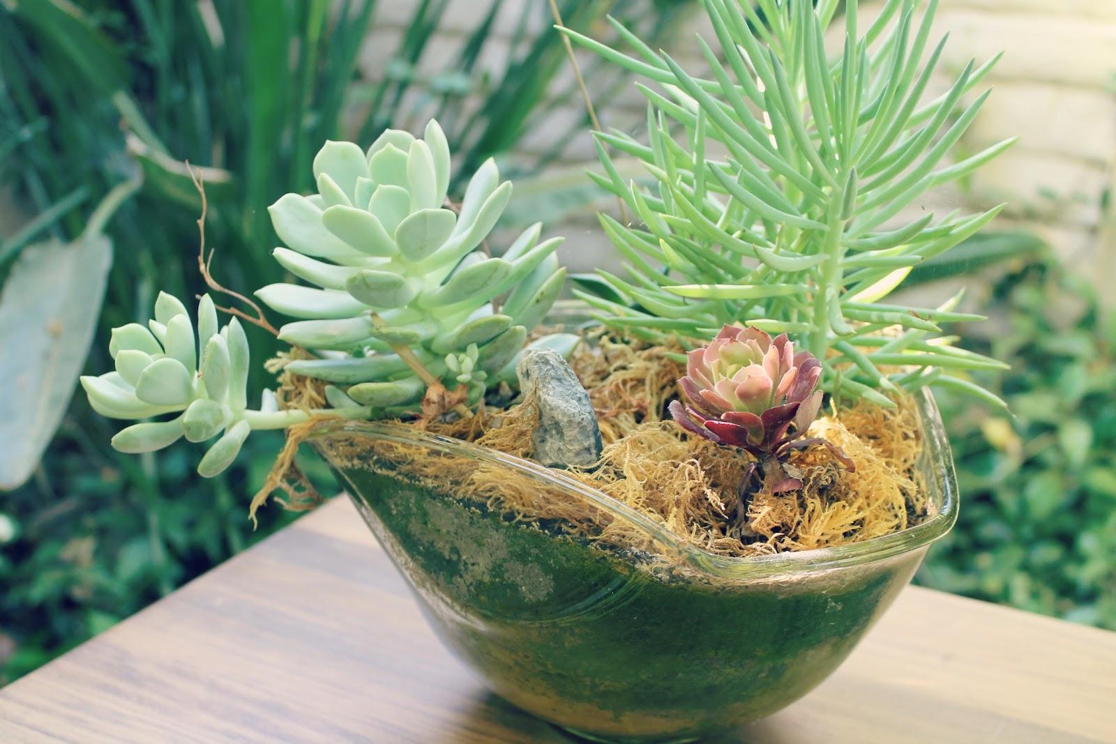 Abhaya Diy Succulent Planters