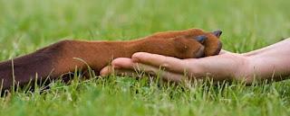 Собачья лапа в ладони человека