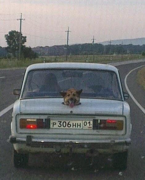 Aracında köpek taşıyanlar için harika bir çözüm