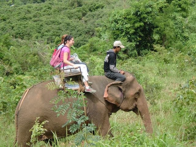 Bamboo Elephant5
