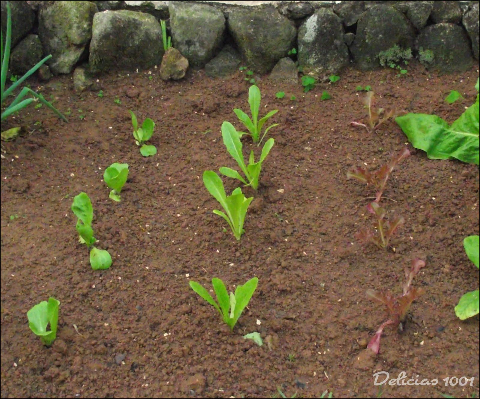 horta jardim e pomar:Meu pomar/horta/jardim: HORTALIÇAS – Delícias 1001Delícias 1001
