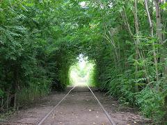 Tunel vegetal sobre las vías