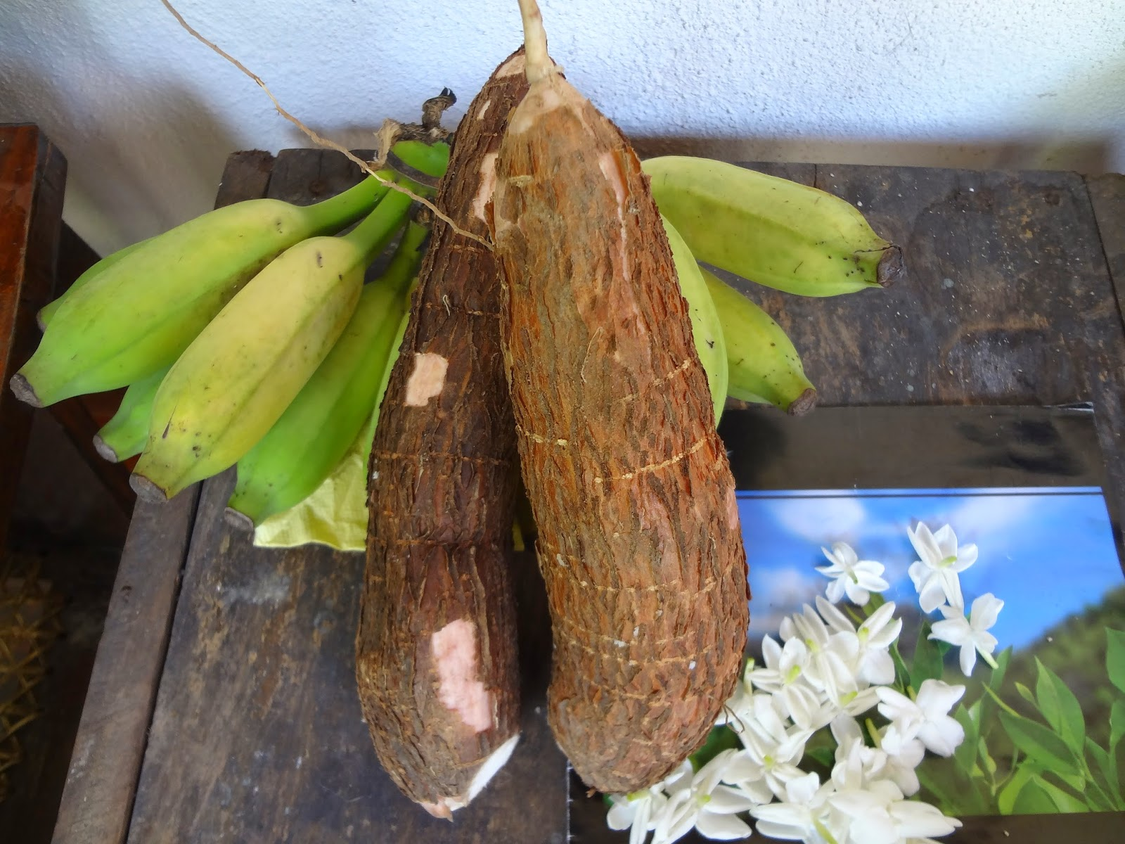 Chinese cancer cure herbs - Cassava Or Manioc Root One More Magic Cure For Cancer