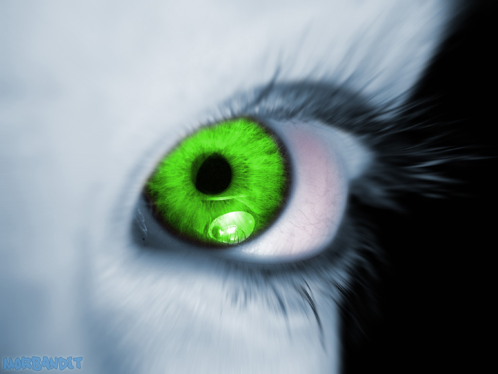 http://4.bp.blogspot.com/-jfvTratXsAk/TanF6FtoZUI/AAAAAAAACDI/910NCVrdnCA/s1600/envy.jpg