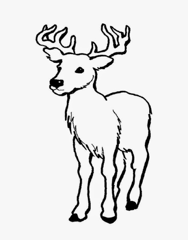 Coloring Pictures Of Deer | Free Coloring Pictures