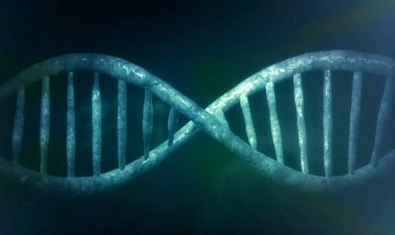 Chinese Try to Modify Human Embryos