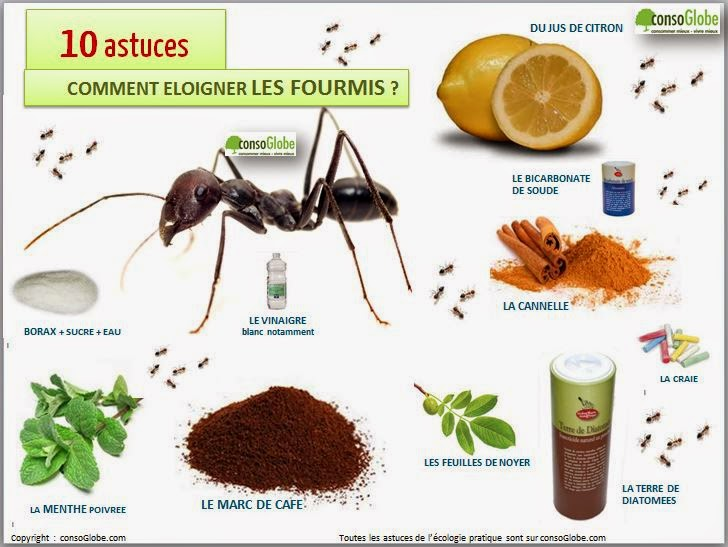 Rsf91 prevention autonomie et survivalisme 12 methodes naturelles eloigner les fourmis - Bicarbonate de soude fourmis ...