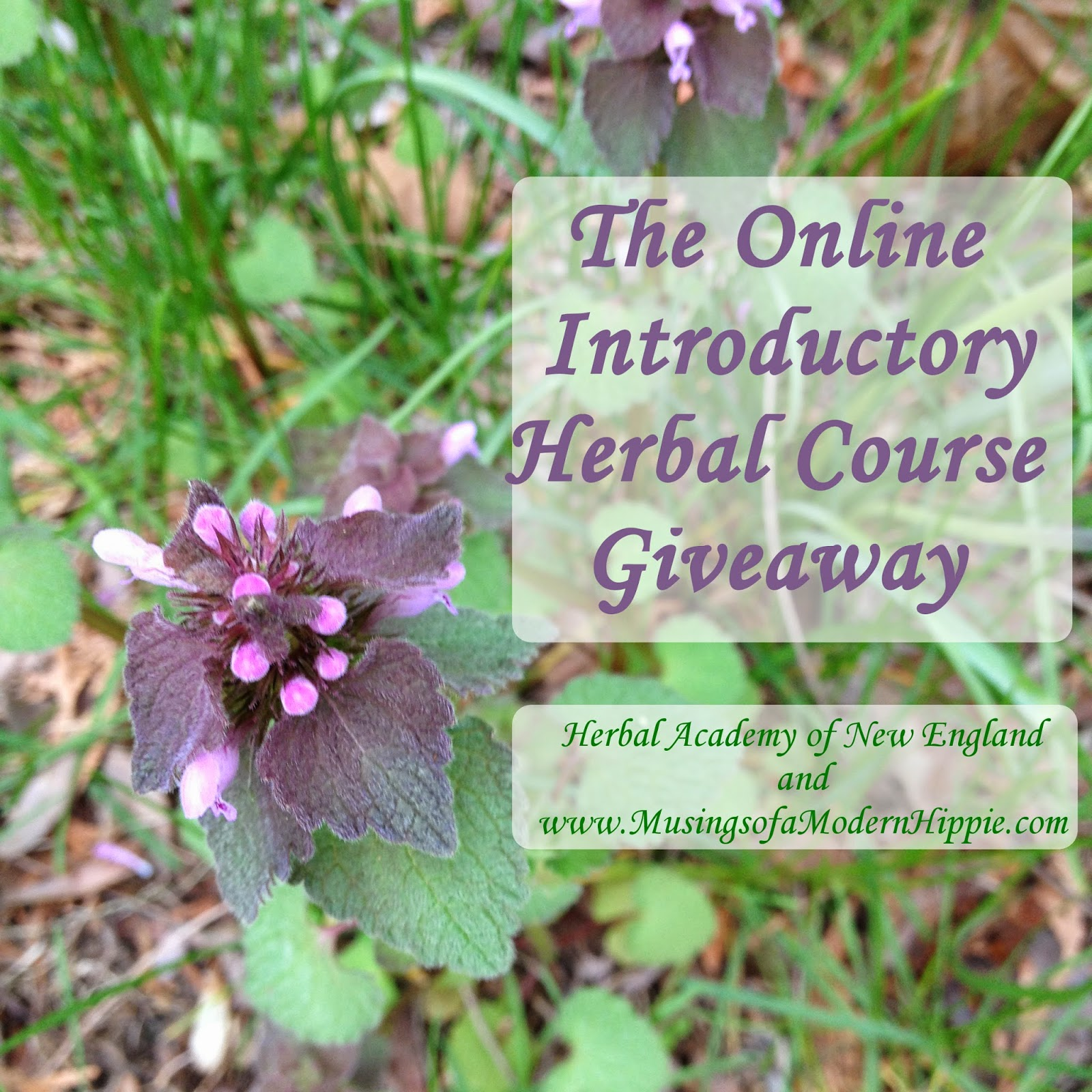 The Online Introductory Herbal Course Giveaway | Musings of a Modern Hippie