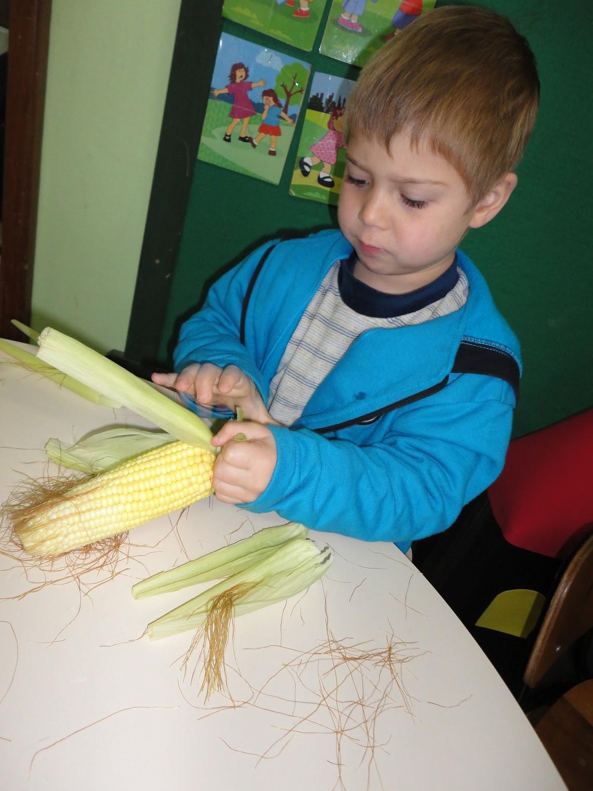 horta jardim e pomar:Descascamos espigas de milho e, após cozidas, as saboreamos