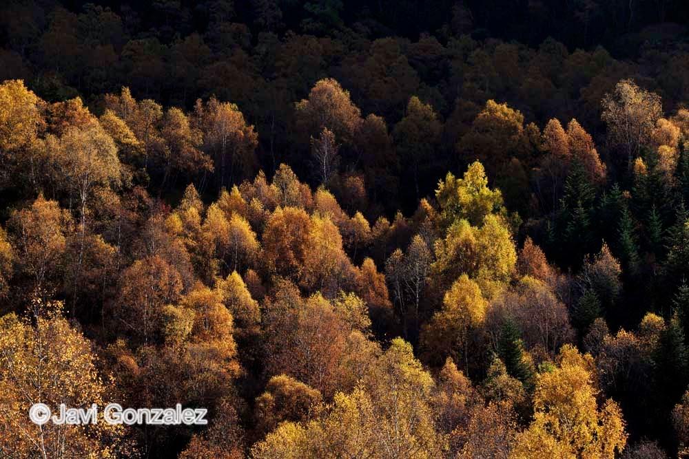 Parque Natural del Alto Pirineo en el Pallars Sobirà, Lleida
