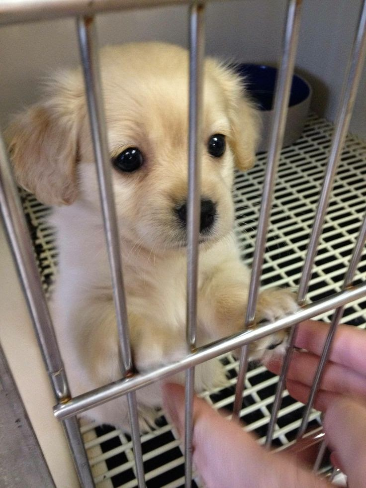 Actual puppy dog eyes - Imgur- who could resist these eyes-adopt don't buy!