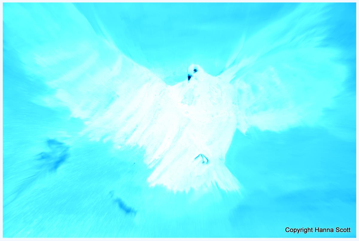 White dove paint