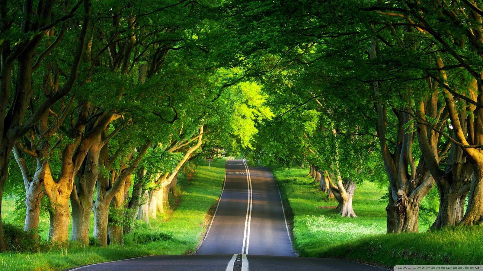 http://4.bp.blogspot.com/-jhdA5407jJI/UJtrJ7KmwaI/AAAAAAAAAxQ/q8AXcbgrrrU/s1600/road_summer_2-1920x1080.jpg