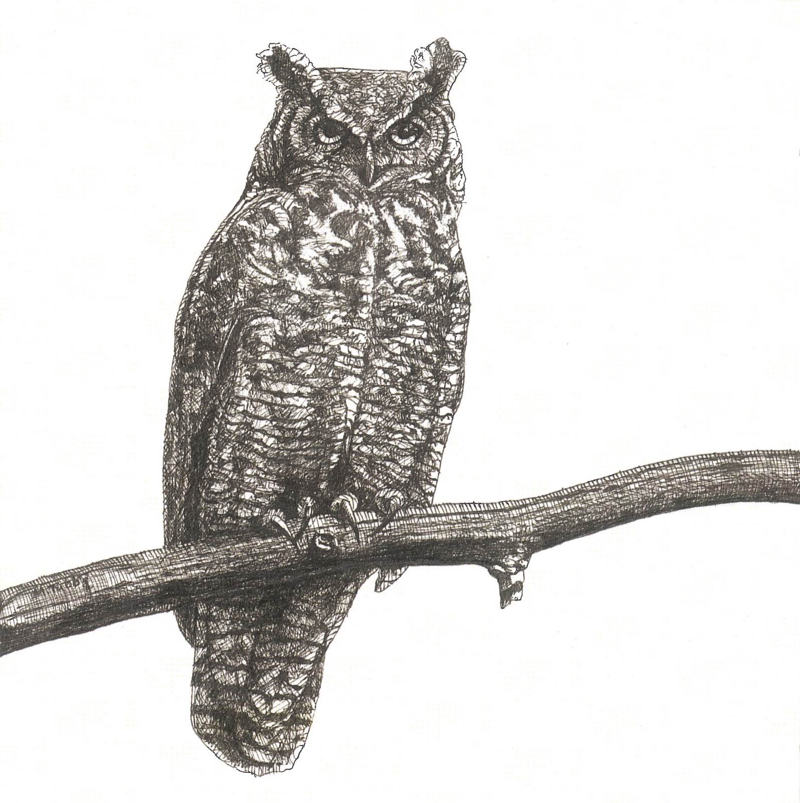 melissa b tubbs ink architecture great horned owl